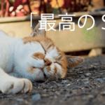 最高のSES猫